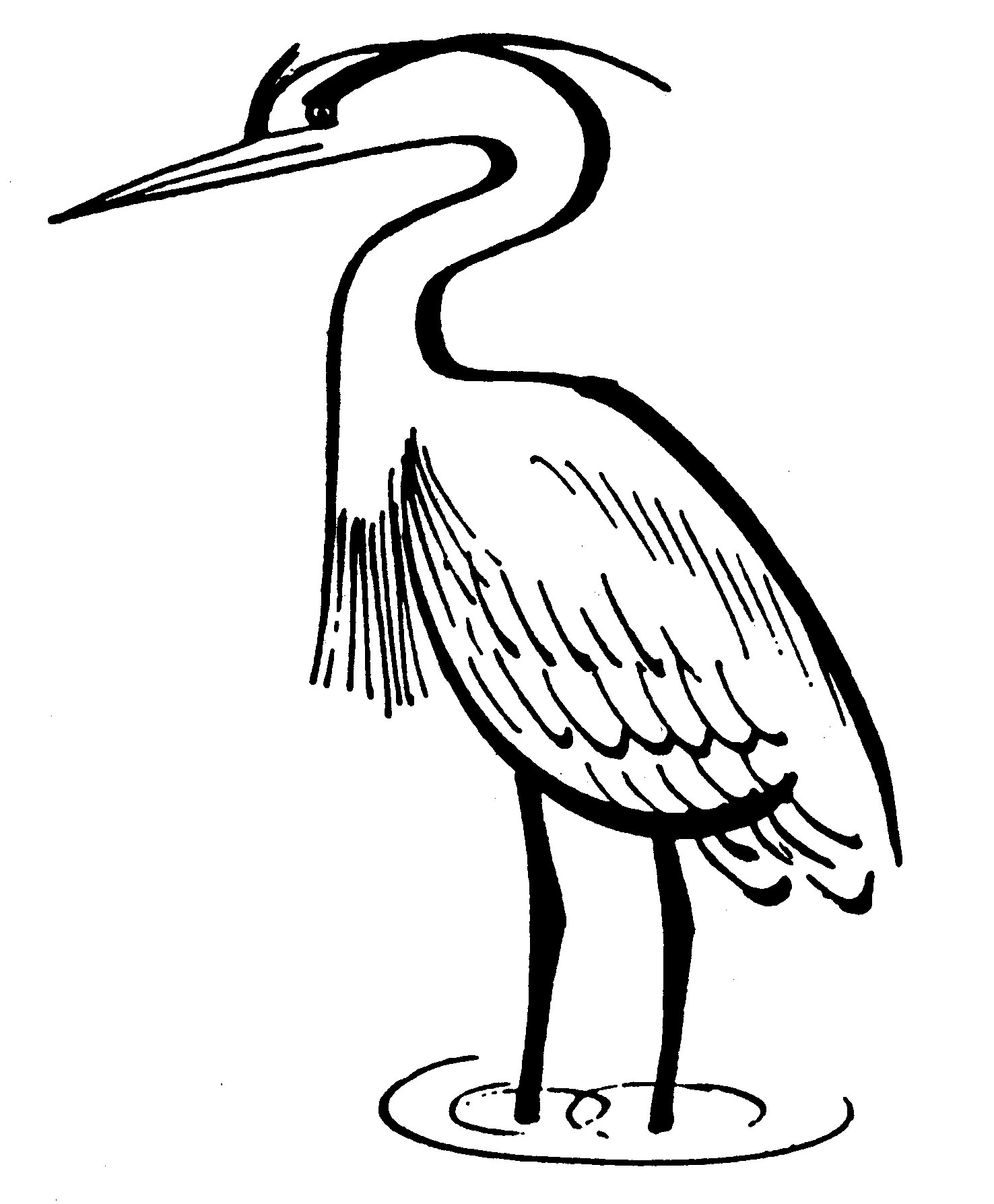 blue heron coloring pages - photo#19